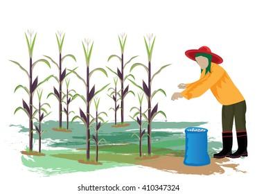 agriculturist manure for corn plant vector design