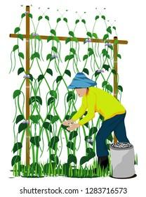 agriculturist manure Lentils plant vector  design