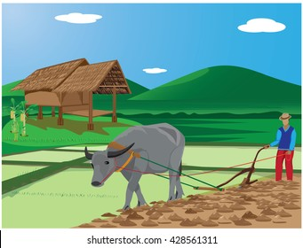 agriculturist plow in paddy field  vector design
