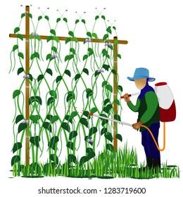 agriculturist spray Lentils plant vector design