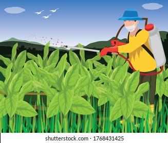agriculturist spray manure into tobacco plant vector design