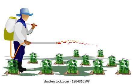 agriculturist sprays Bean plant vector design