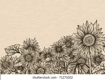 Aiming towards the sky. Sunflowers