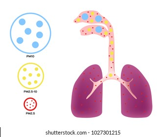 air pollution going to human lung . pm 2.5 - 10 vector
