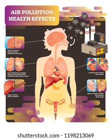 Air pollution health effect vector illustration. Cause of lungs problem, heart attack, liver, spleen and blood illness. Asthma, bronchitis, cancer and headache diagnosis.