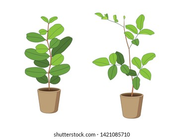 air purification green leaves trees in pots fresh on white background illustration vector