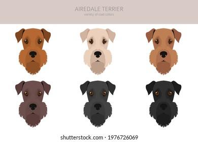 Airedale terrier, all colour clipart. Different coat colors, set. Vector illustration