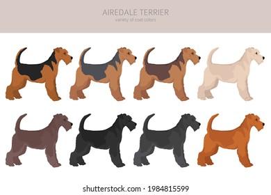 Airedale terrier all colours clipart. Different coat colors set. Vector illustration