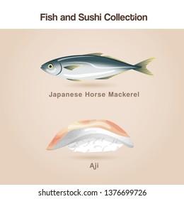 Aji Sushi : Fish and sushi set : Vector Illustration