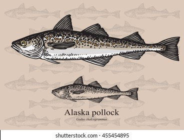 Alaska pollock, Mintai. Vector illustration with refined details and optimized stroke that allows the image to be used in small sizes (in packaging design, decoration, educational graphics, etc.)