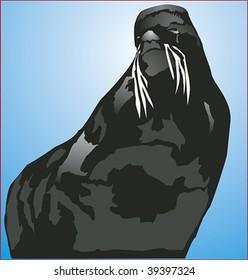 Alaskan fur seal full face and body.