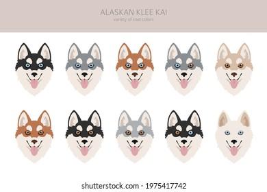 Alaskan klee kai all colours clipart. Different coat colors set. Vector illustration