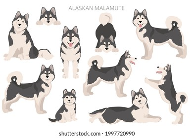 Alaskan malamute all colours clipart. Different coat colors and poses set.  Vector illustration