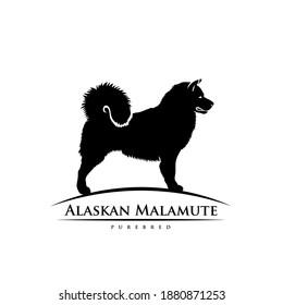 Alaskan malamute - dog breed - isolated vector illustration