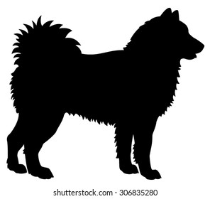 Alaskan Malamute purebred dog standing in profile - black side view vector silhouette isolated on white