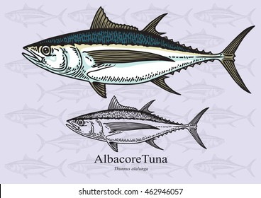 Albacore Tuna Fish. Vector illustration with refined details and optimized stroke that allows the image to be used in small sizes (in packaging design, decoration, educational graphics, etc.)