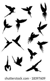 alexandrine krameri parrot flying,  silhouettes collection