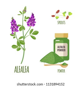 Alfalfa set with powder and sproots in flat style isolated on white background. Organic healthy food. Medicinal herbs collection. Vector illustration.