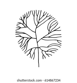An Alga sketch vector