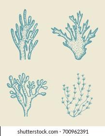 alga vector sketch