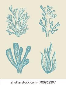 alga vector sketch set. illustration