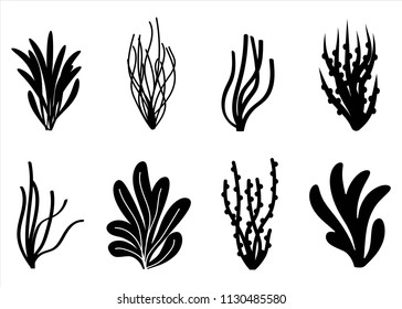algae icon set. Marine plants isolated.