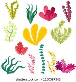 algae set on white background flat style vector illustration