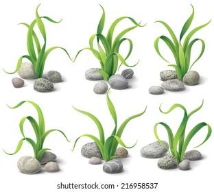 Algae and stones set isolated  on white.
