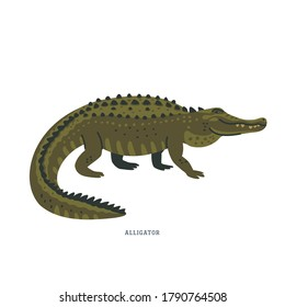 Alligator. An alligator is a crocodilian with black or dark olive-brown skin with light undersides. Simple Colorful vector illustration in flat cartoon style on white background.