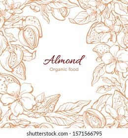 Almond border. Vector art template. Botany realistic foliage, aroma nuts, leaves and flower in bloom. Hand drawn floral illustration on white background. Art vintage frame. Organic healthy oil