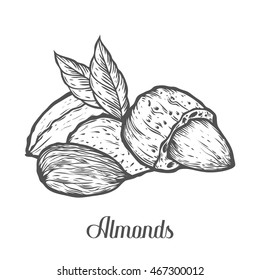 Almond nut seed vector. Isolated on white background. Almond milk food ingredient. Engraved hand drawn almond illustration in retro vintage style. Almond Organic Food, cosmetics, treatment component.