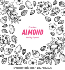 Almond nuts hand drawn sketch. Nuts vector illustration. Organic healthy food. Great for packaging design. Engraved style. Black and white color.
