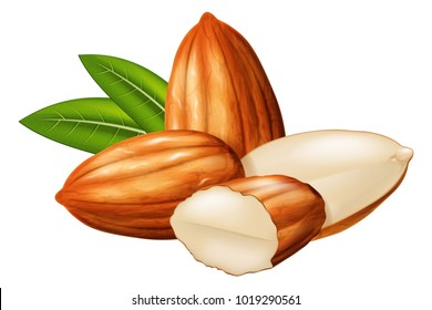 Almond nuts whole and half split with green leaves in the background. Vector illustration.
