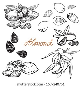 Almond set. Hand drawn sketch. Graphic illustration. Black and white collection elements