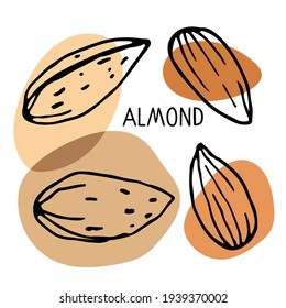 Almond set. Hand drawn vector nut and almond text. Doodle Sketch with colored spots. Organic fresh cooking, healthy diet ingredient. Almond Icon set. For label template, packaging, farm market emblem.