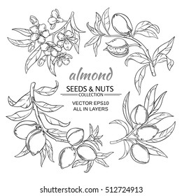 almond vector set