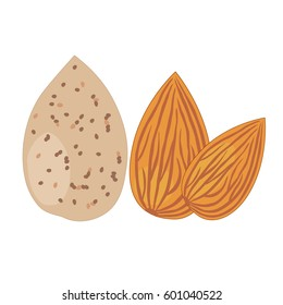 Almonds, isolated objects on white background. Vector illustration.