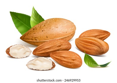 Almonds with kernels and leaves. Vector illustration.