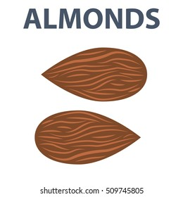 Almonds nuts vector illustration