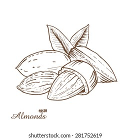 Almonds. Woodcut style. Hand drawn sketch walnut. Vector illustration.