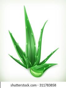 Aloe, vector icon