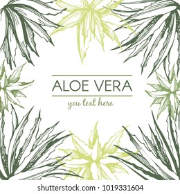 Aloe vera frame. Botanical hand drawn illustration. Engraved style.