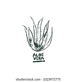 Aloe vera hand drawn plant, white