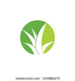 Aloe Vera logo vector icon  concept
