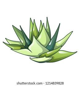 Aloe vera plant icon. Cartoon of aloe vera plant vector icon for web design isolated on white background