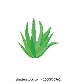 Aloe vera plant isolated on white, vector flat illustration.