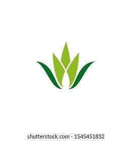 Aloe vera plant logo icon design vector template for beauty salon
