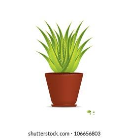 Aloe Vera plant in pot isolated on white.Vector