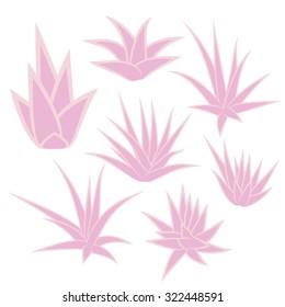 Aloe vera, succulent plant, flower set isolated on white background. Vector illustration.