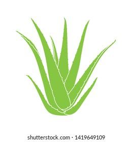 Aloe vera succulent plant isolated on white background. Vector illustration